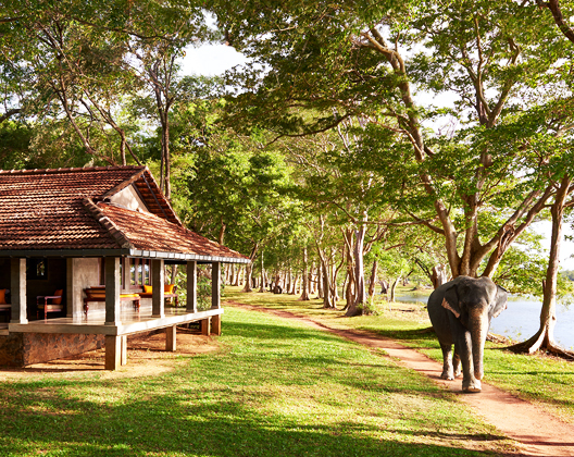 Enjoy 40% off the Superior Room Only Rate at Habarana Village by Cinnamon